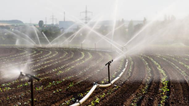 Bewässerung Pflanzen in Westdeutschland mit Bewässerungssystem mit Sprinklern in einem Feld angebaut. – Foto