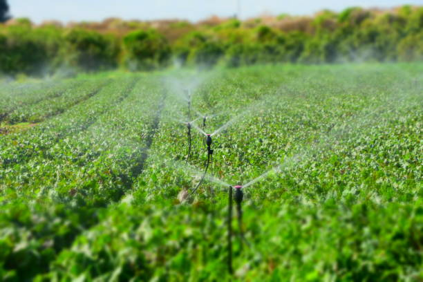 Watering Field Watering Field irrigation equipment stock pictures, royalty-free photos & images