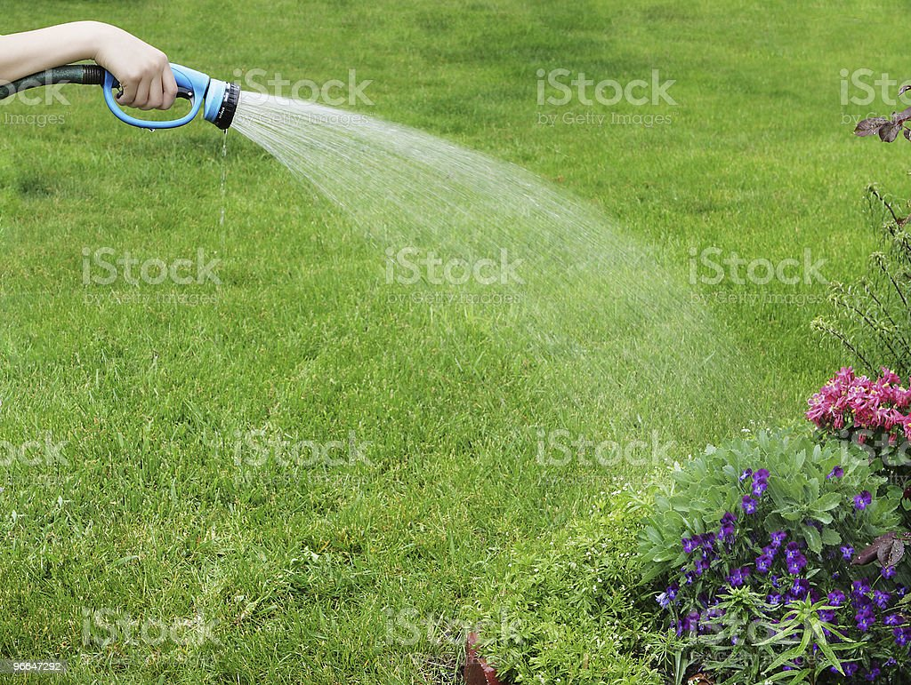 Watering flower royalty-free stock photo