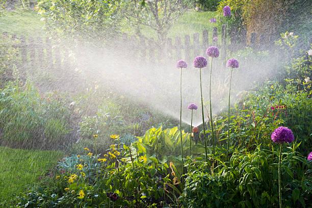 Gießen Blumenbeeten – Foto