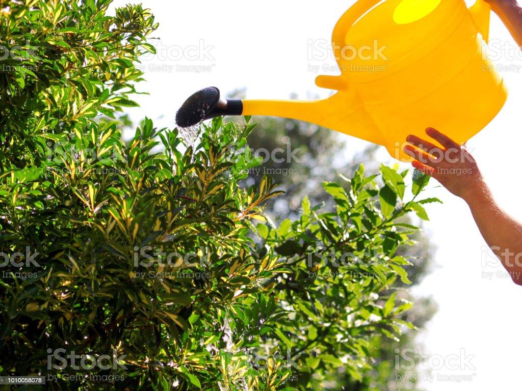Regar as flores no jardim com um regador amarelo. Close-up na água vertendo do jardim, molhando o trabalho colocar água. Vertendo do regador em plantas água, jatos de água do regador. - foto de acervo