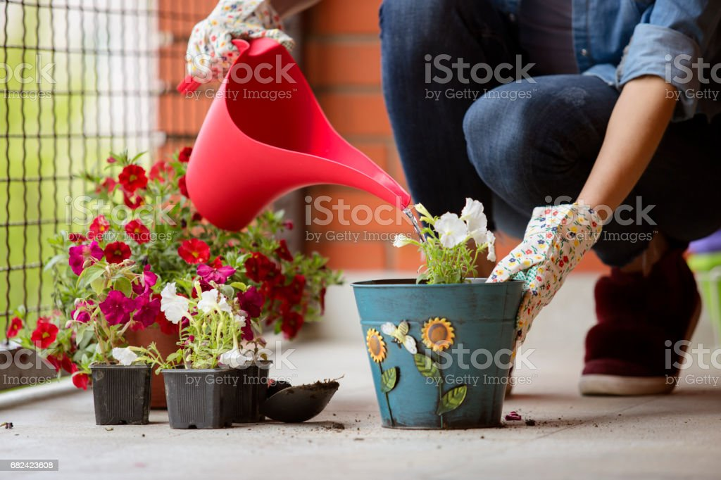 Watering flowers on balcony royalty-free stock photo