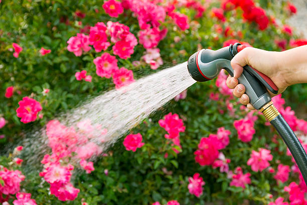 watering flowers - garden hose stock pictures, royalty-free photos & images