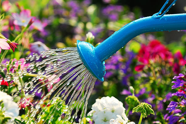 watering flowers - watering stock pictures, royalty-free photos & images