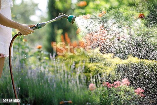 woman watering garden flowers with hose in summer