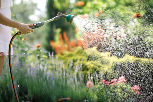Watering garden flowers with hose woman watering garden flowers with hose in summer hose stock pictures, royalty-free photos & images