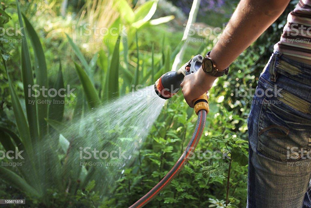 Watering garden stock photo