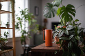 It's watering day. Houseplant and watering jar on a table in a cozy living room