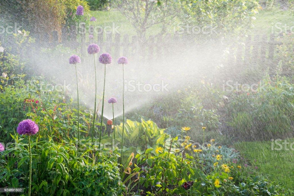 Arrosage dans le jardin fleuri - Photo