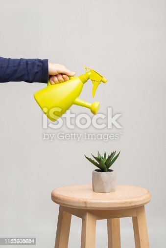 watering indoor plants, watering a horse, home plant growing, succulents