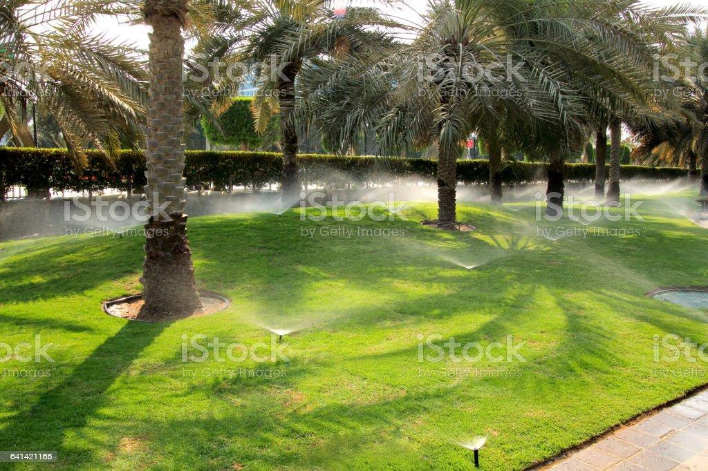 arroser le gazon à Dubaï. arroseur à la stérilisation de l'eau. - Photo