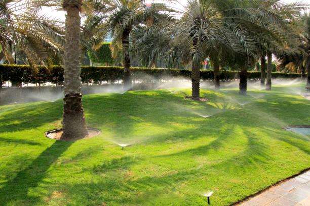 bewässerung rasengras in dubai. sprinkler wasser sterilisiert. - palmengarten stock-fotos und bilder