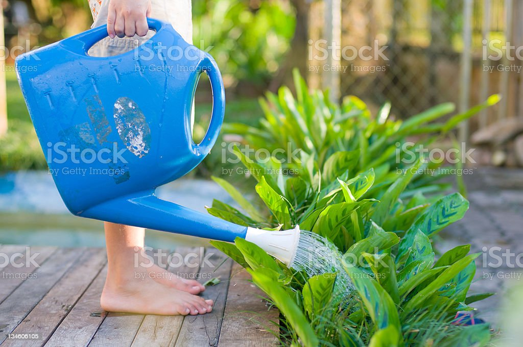 watering plant in the garden royalty-free stock photo