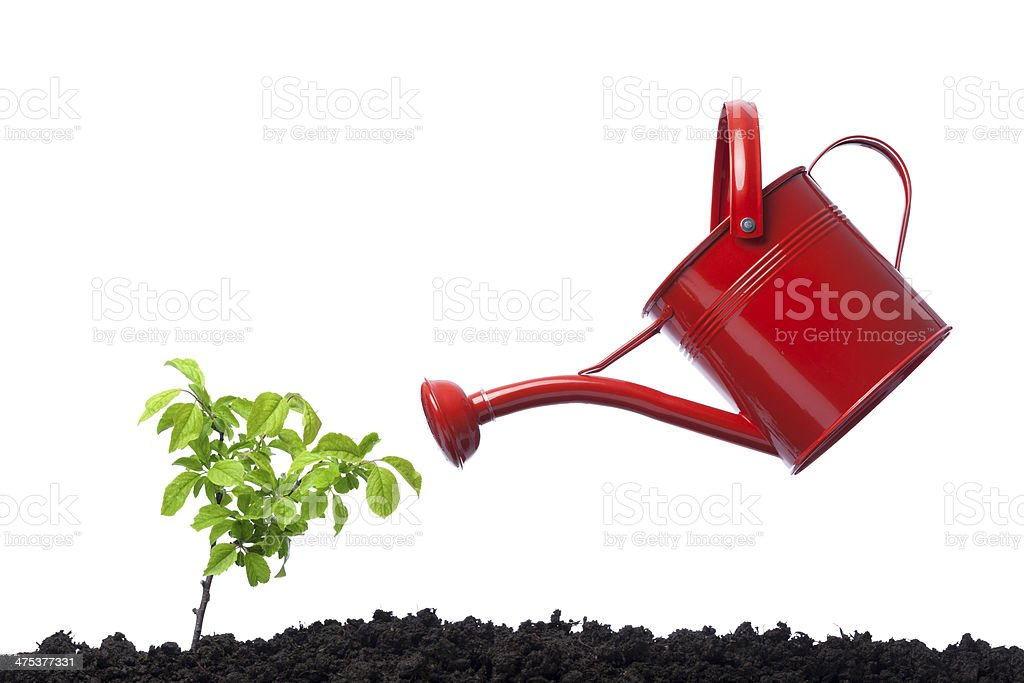 Watering plant on white background royalty-free stock photo