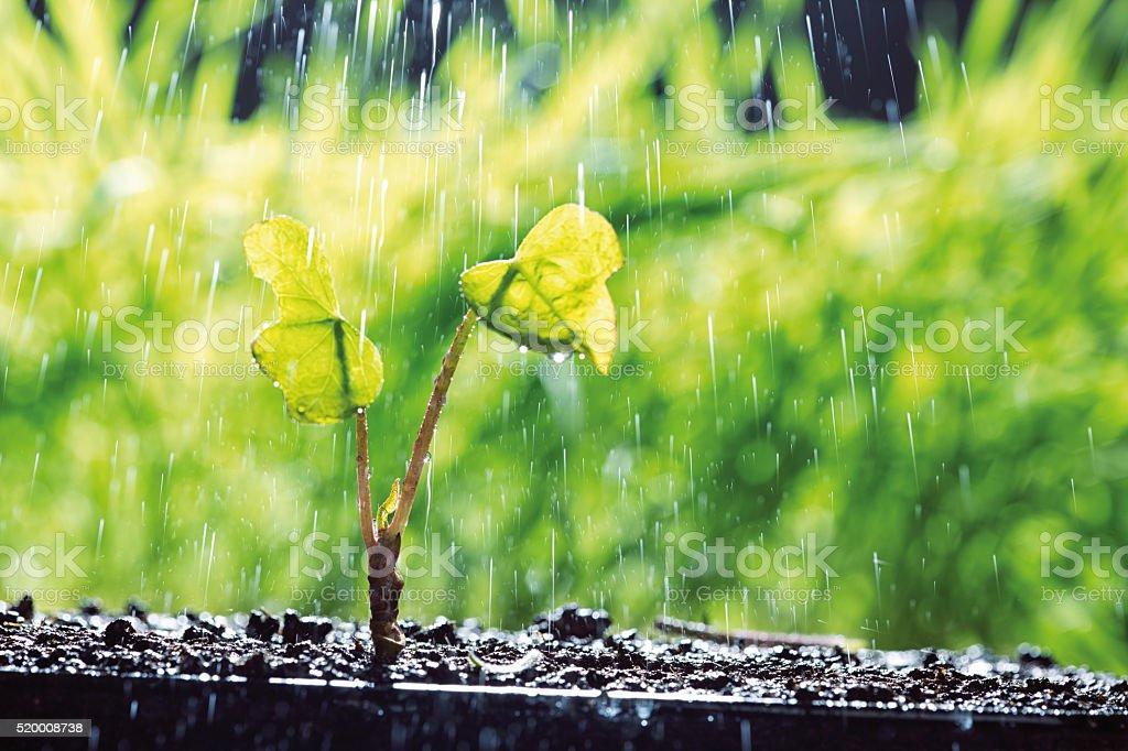 Watering plant stock photo