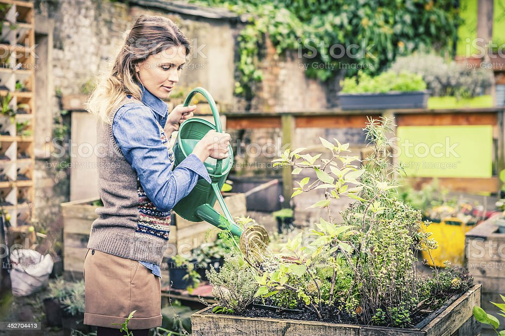 Watering Plants, Gardening Mid Adult Woman stock photo
