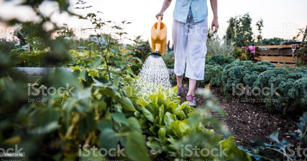 Gießen Pflanzen im Garten – Foto