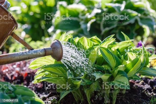 Photo of watering plants on flowerbed in summer garden