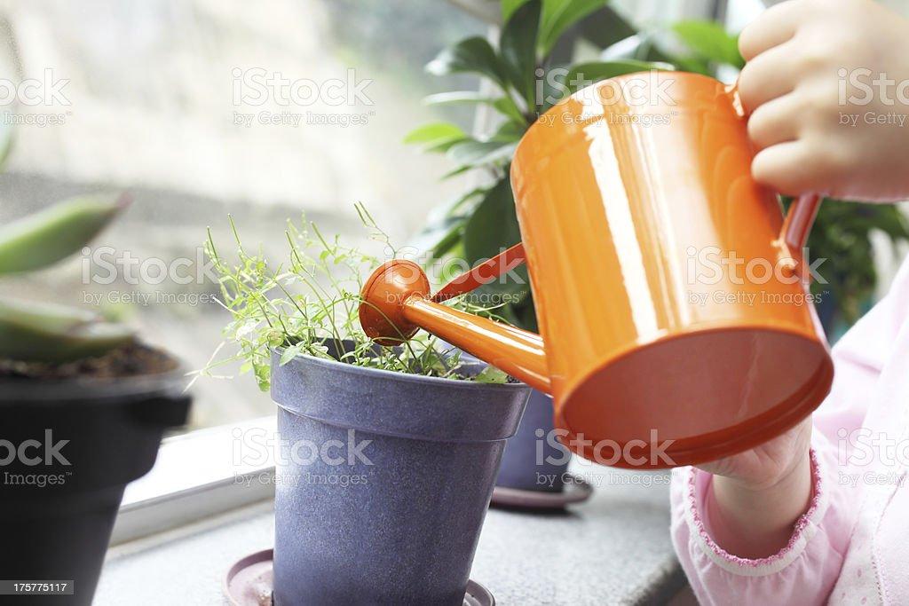 Watering Plants stock photo