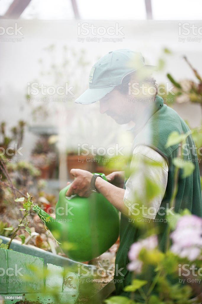 Watering plants with reflection on glass royalty-free stock photo