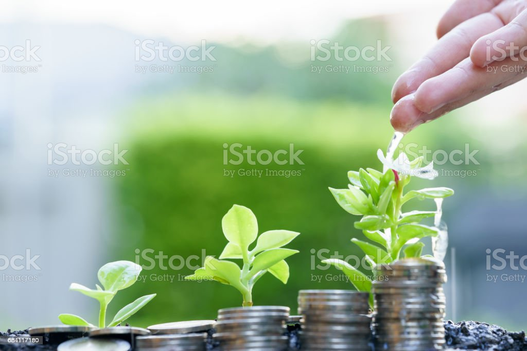 Watering small trees with strack coins. foto stock royalty-free
