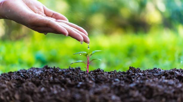 bewässerung von kleiner bäumen, kinder hand bewässerung eine jungpflanze, grünpflanzen in naturparks, die globale erwärmung zu reduzieren. ökologie-konzept - wachstumstabelle baby stock-fotos und bilder