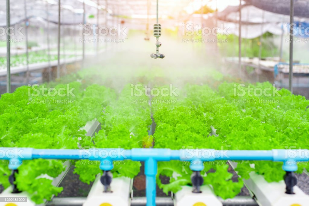 Watering system in Vegetables hydroponics garden ,Organic vegetable cultivation farm,copy space. stock photo