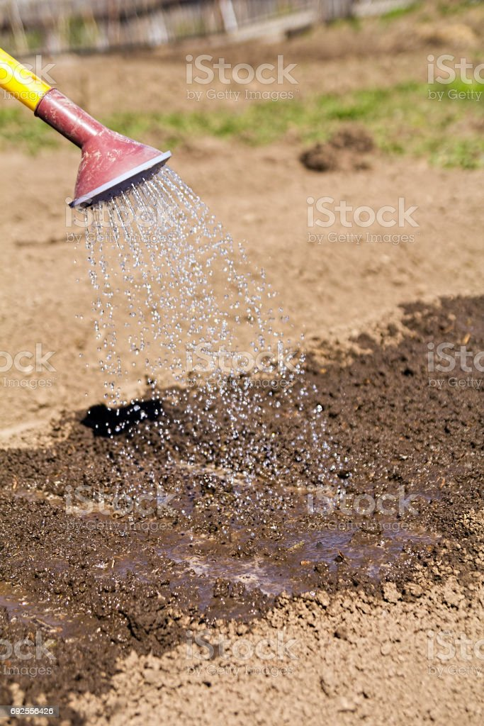 Watering the beds from a watering can stock photo