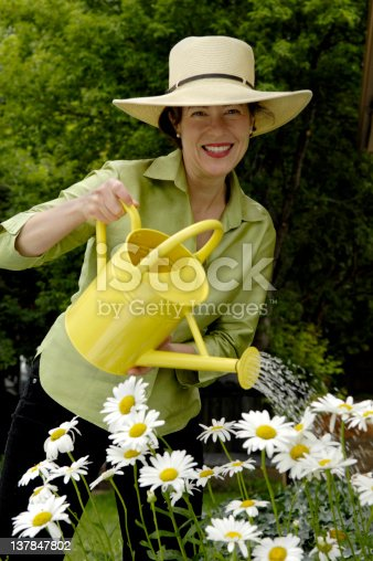 1175869940 istock photo Watering The Daisy's 137847802