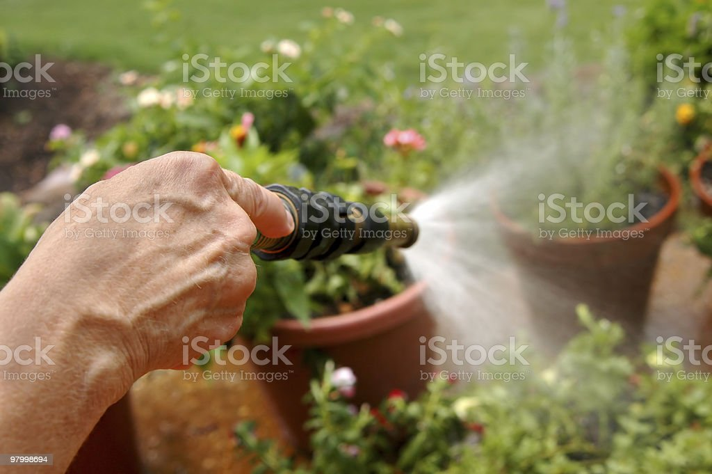 Watering the Flowers royalty free stockfoto