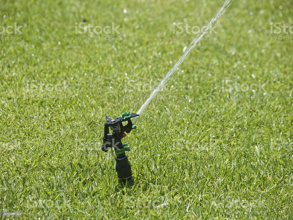 Watering the grass royalty-free stock photo