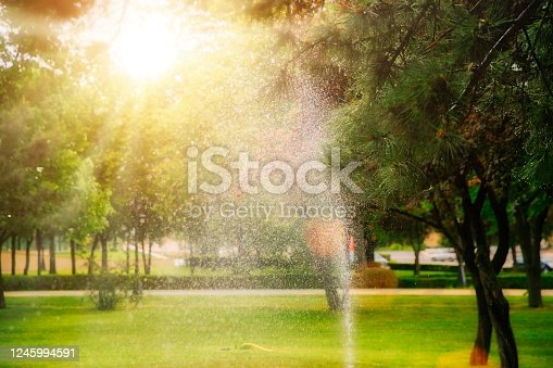 Watering the lawn in the park