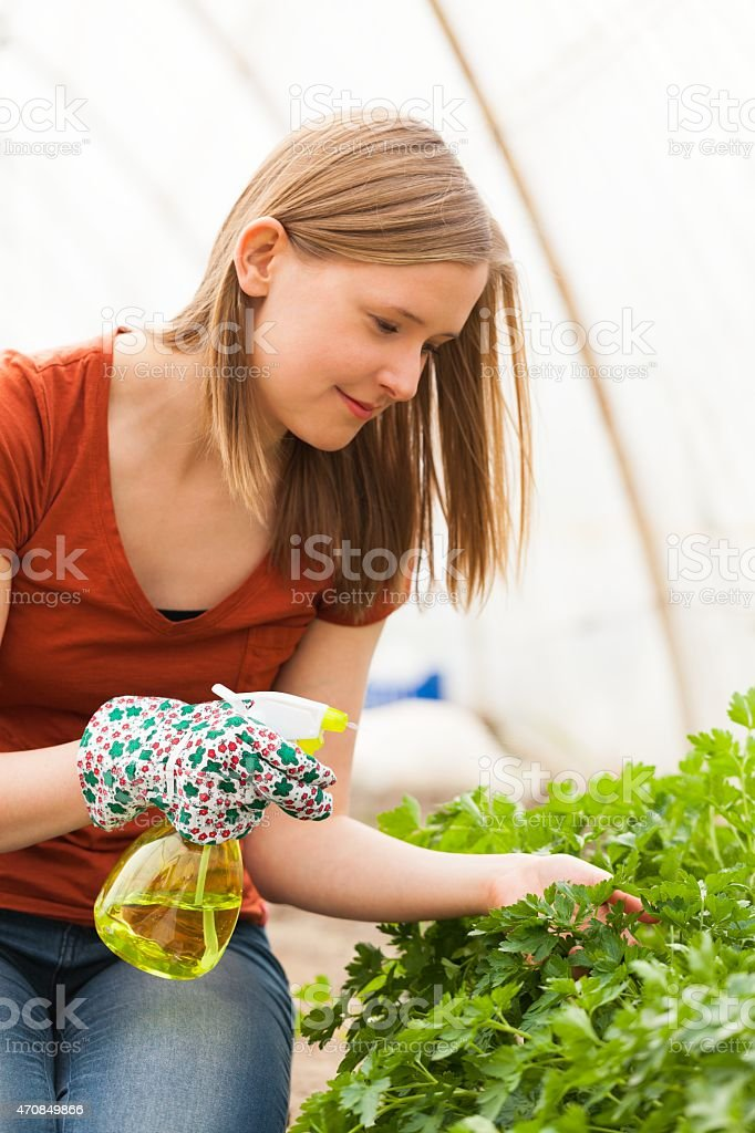 Watering The Plants stock photo