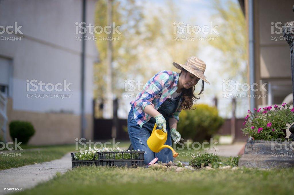 Arroser les plantes photo libre de droits