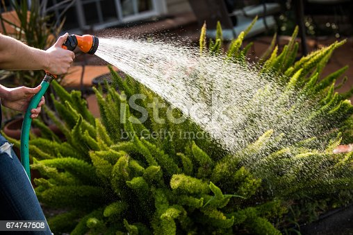Female adult watering her plants with a spray nozzle. Light shines on the spray of water coming from the hose and glistens on the beads of water as it showers over the plant.