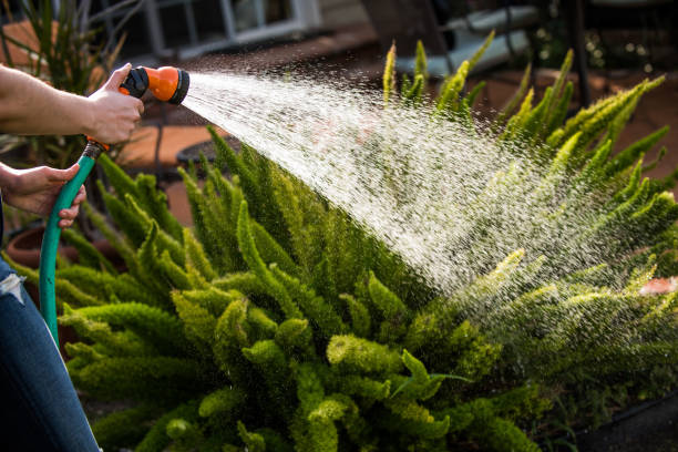 watering the plants - watering stock pictures, royalty-free photos & images