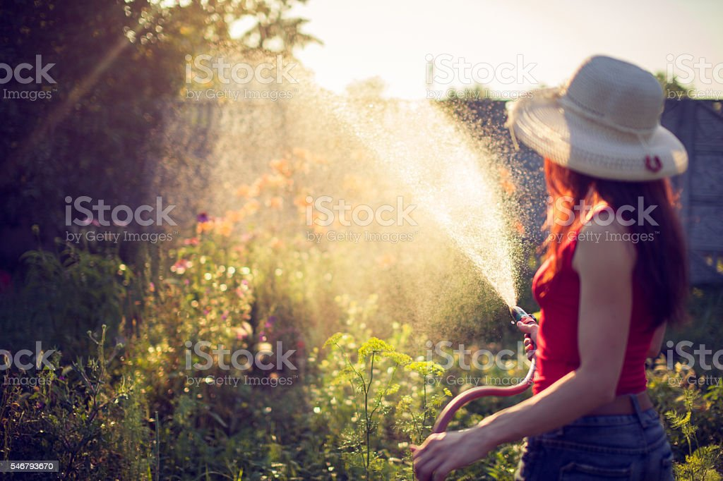Watering  with a hose,  gardening concept stock photo