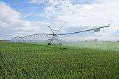 Structure irrigation system self propelled mobile Spray (pivot) in cereal field- Estructura de sistema de Riego por Aspersión móvil autopropulsado ( pivot) en campo de cereales