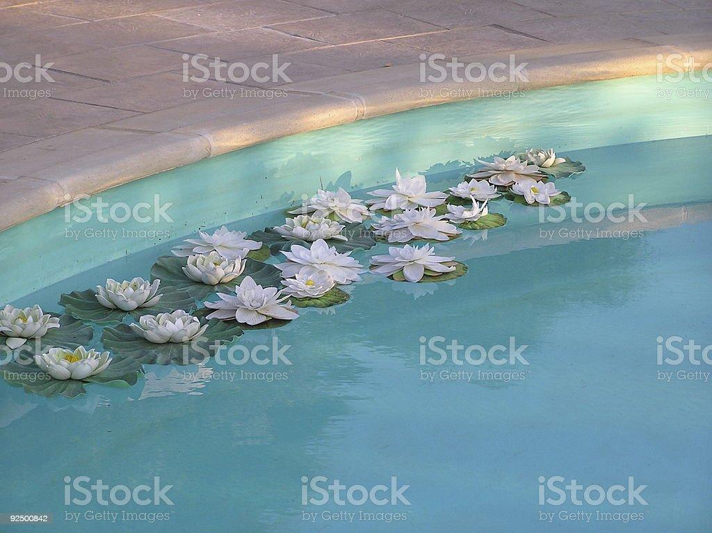 waterlilies royalty-free stock photo