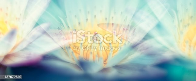 Waterlily flower panoramic  soft color pastel tones