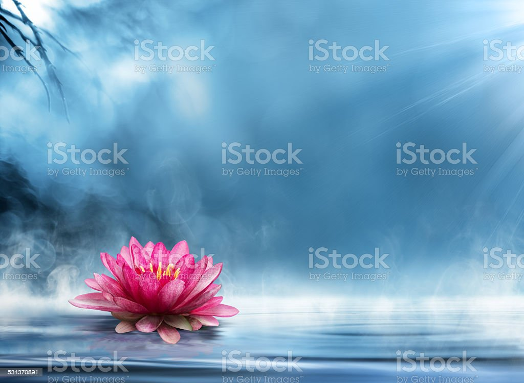 waterlily on water - spirituality zen in nature - relaxation stock photo