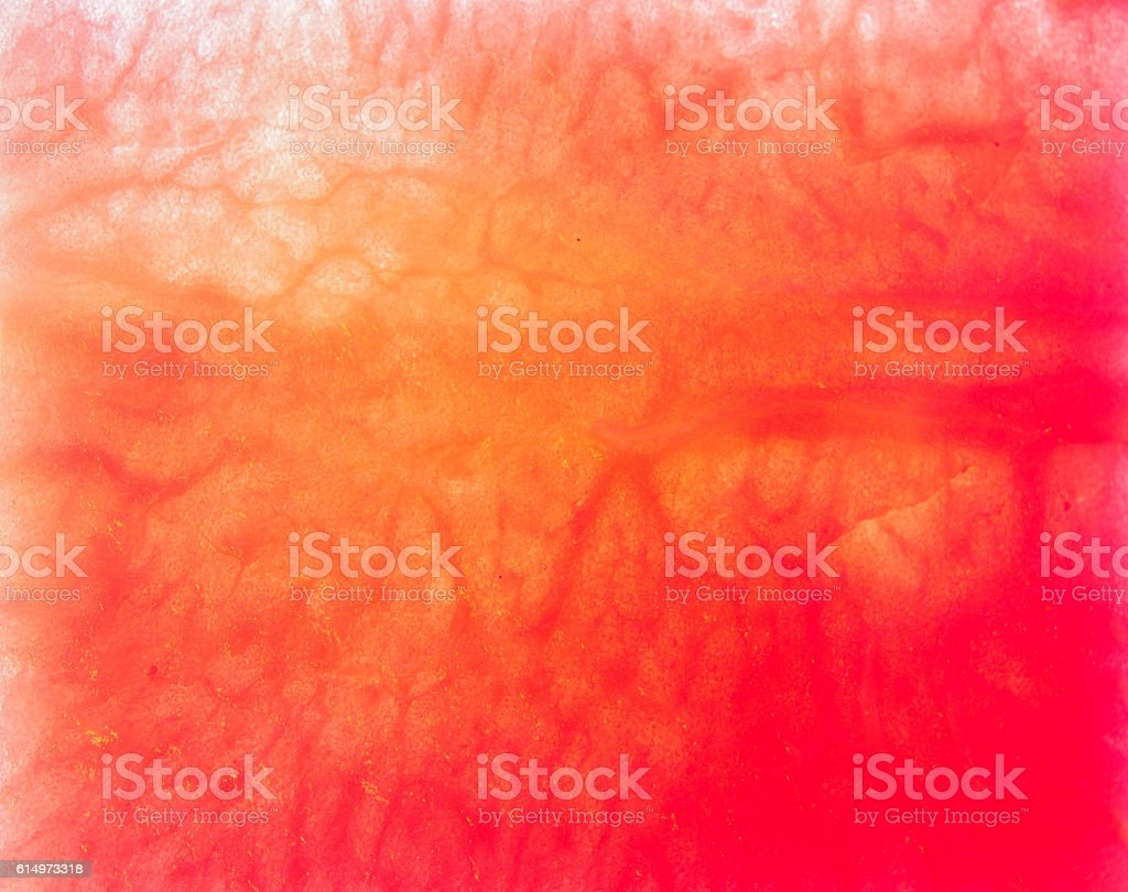 Watermelon fruit structure stock photo