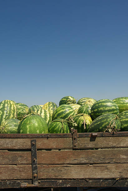 Wassermelone – Foto