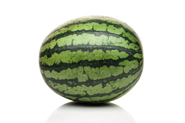 pé de melancia, isolado no fundo branco - foto de acervo