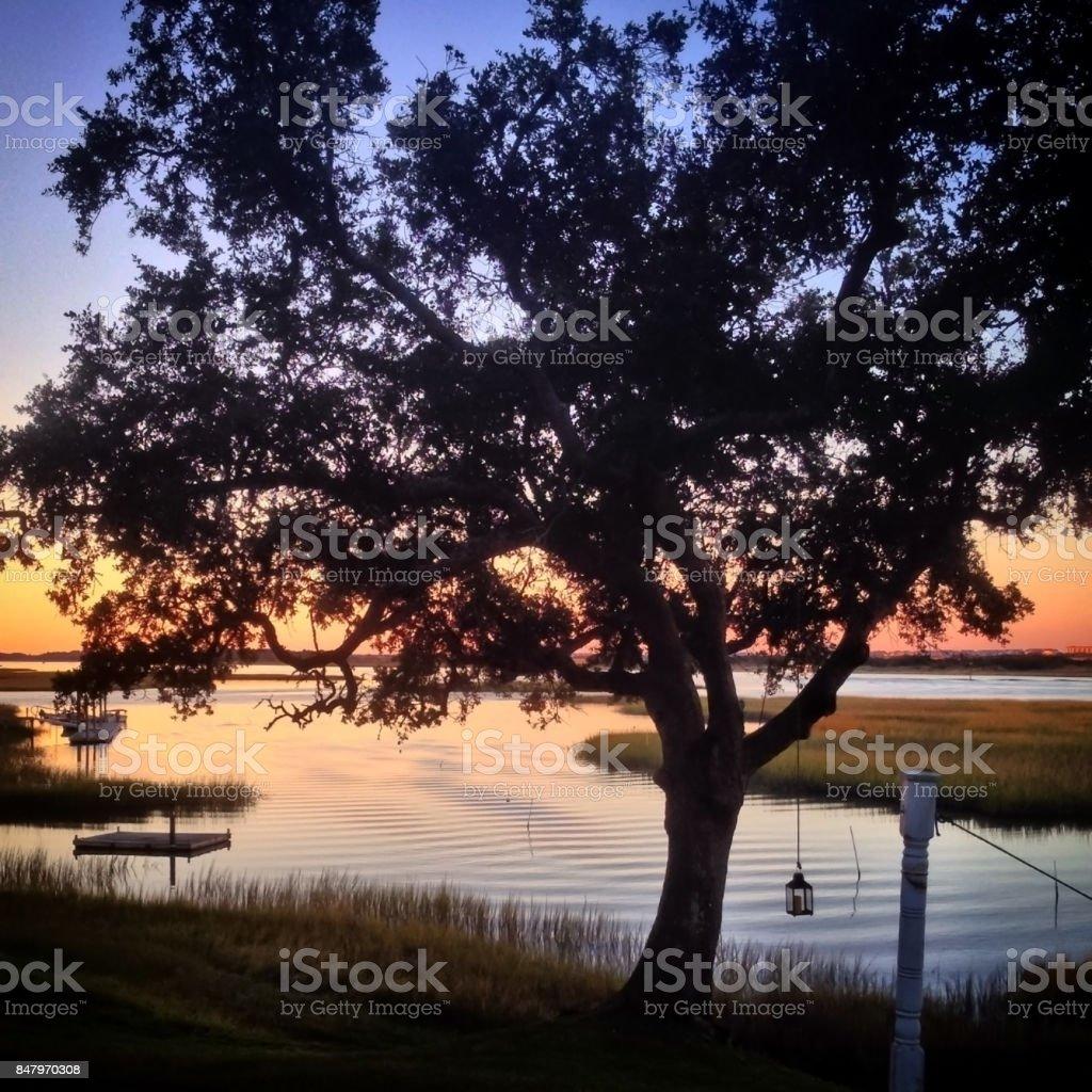 Waterside Oak Tree stock photo