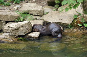 waterside scenery with Otter