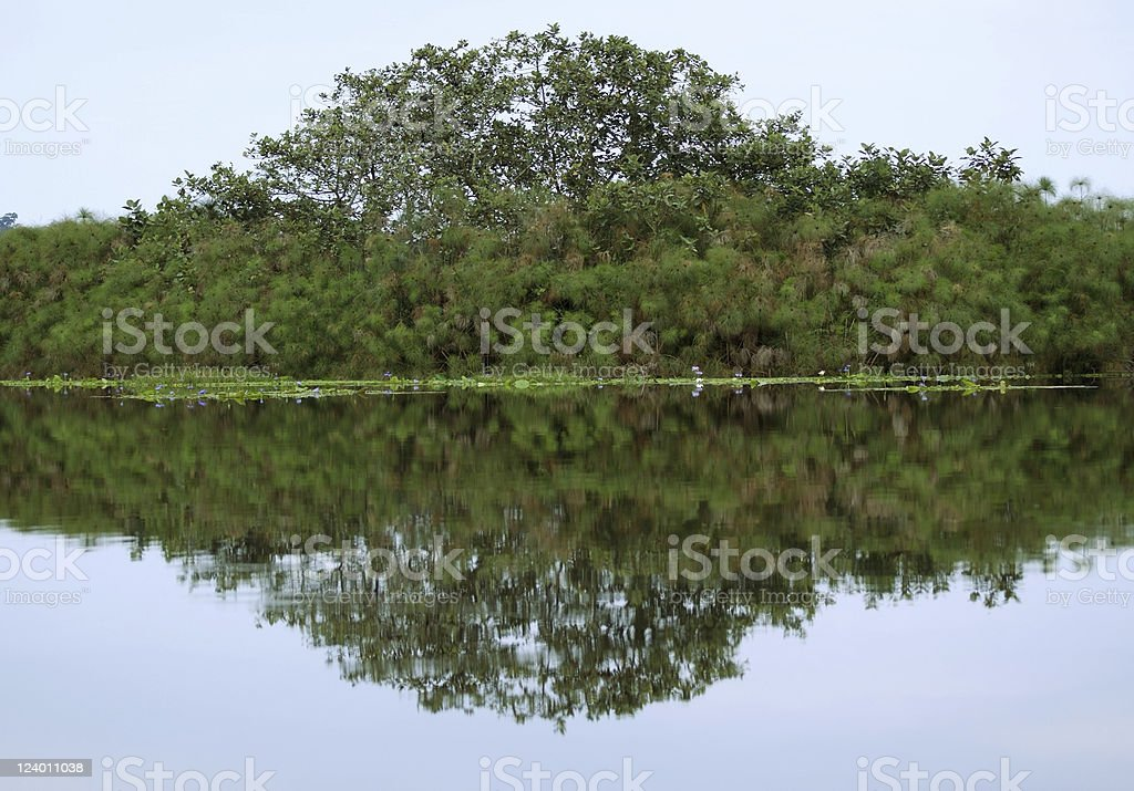 waterside view of the Lake Victoria near Entebbe stock photo