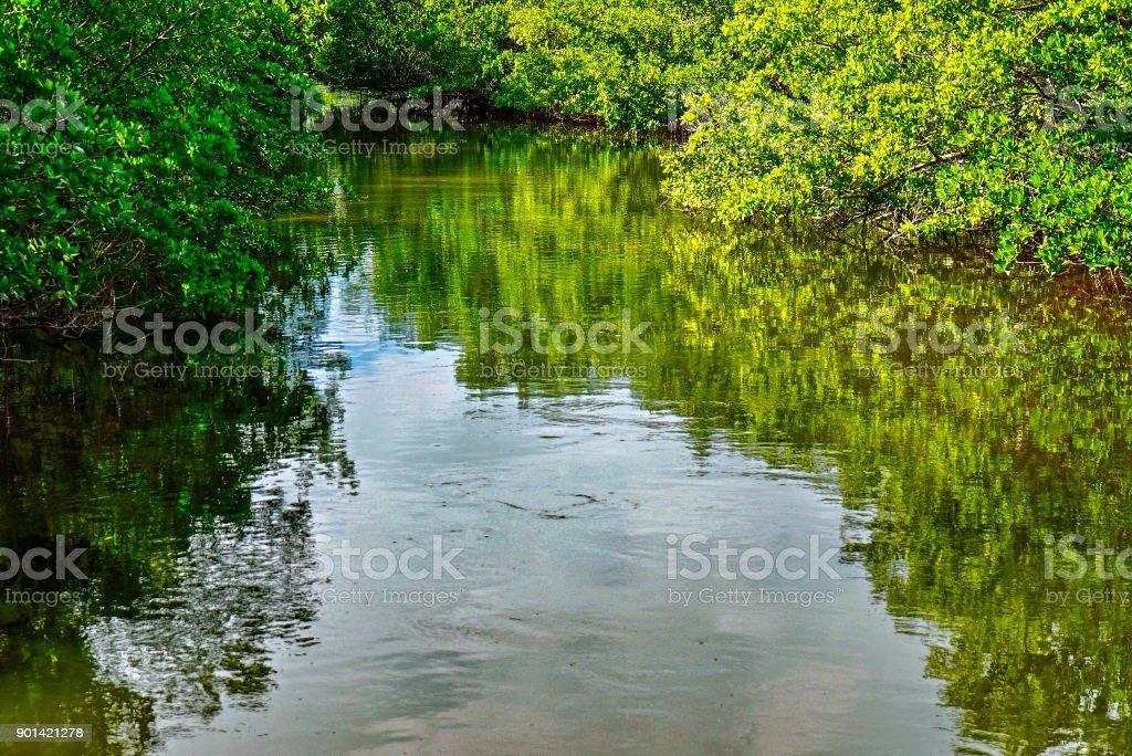 Waterway at Ding Darling National Wildlife Refuge stock photo