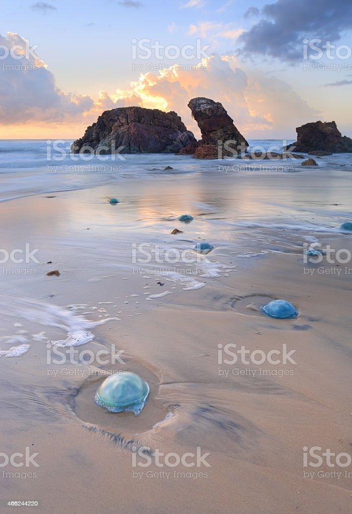 Watongo Rocks and blue Jelly Blubber jellyfish stock photo