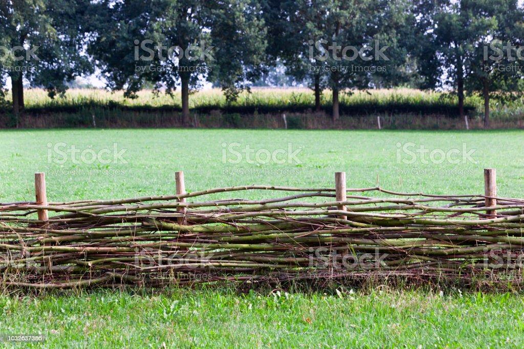 Lel hek met een maïsveld in de achtergrond foto